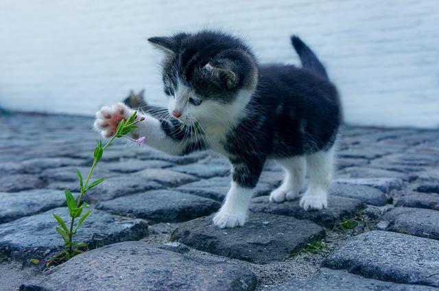 Ctihodná a vážená kočka