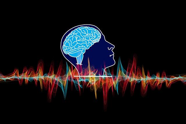 křivka mozku