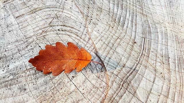 dubový list na dřevě.jpg