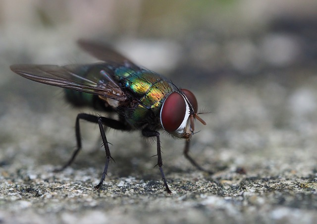 zvětšená moucha
